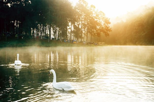 Озеро с белым лебедем