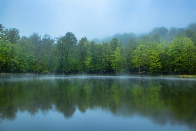 Озеро с лесом в туманный день