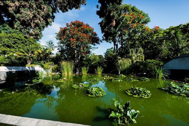 Lake with lilies in the park in puerto de la cruz. north tenerife, canary islands, spain