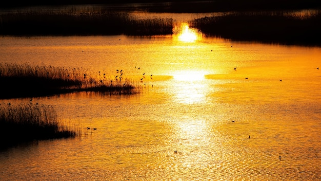Lake with multiple herons at sunset with yellow sunlight reflected in the surface of the water in moldova