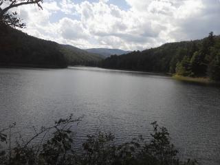 Lake, woods