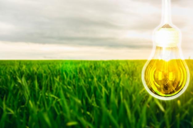フィールドの背の高い緑の草の上にランプ。新しいアイデアのコンセプト。ブレーンストーミング。晴れた日の牧草地の風景。夏時間。小麦の成長。農業の概念。