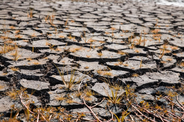 Land with dry and cracked ground. global warming