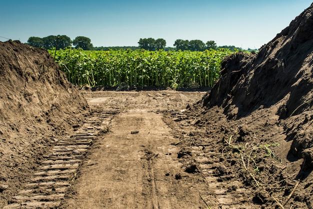 Земля со следами проходящего мимо гусеничного бульдозера на фоне поля с подсолнухой