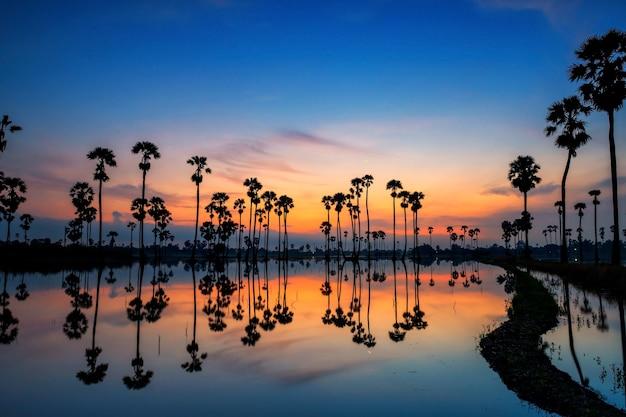 夜明けの水と薄明の空にスカイラインの反射とシルエットの砂糖椰子の木の風景、dongtan sam khok、pathum thani、タイ。熱帯の国、サイアムの有名な旅行先。