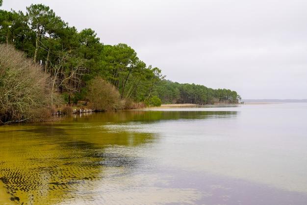Landesフランスのマガイド湖のsanguinet砂浜ウッドパイン