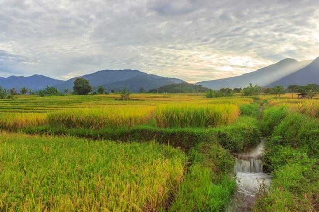 風景インドネシアの美しい山々と朝の緑の田んぼの広大な広がり