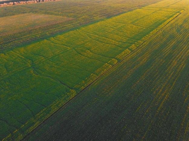 Пейзажная аэрофотоснимок красивого сельскохозяйственного поля зерновых во время заката