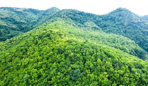 Landscape aerial  view  mountain green natural forest in the rain season on white background isolate