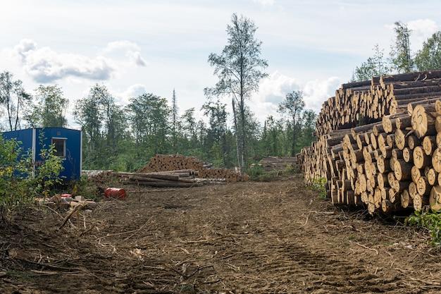 Пейзаж после вырубки - вырубленная земля и стопки пиленого бревна