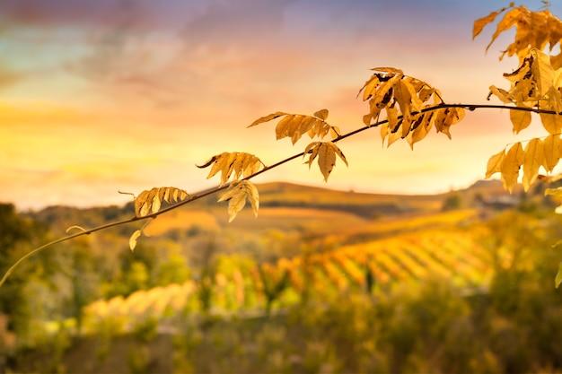Пейзаж и листва в пьемонте осенью