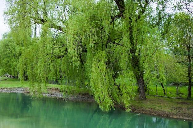 그린 리버의 풍경과 전망. samegrelo martvili의 강. 그린 리버의 풍경입니다.