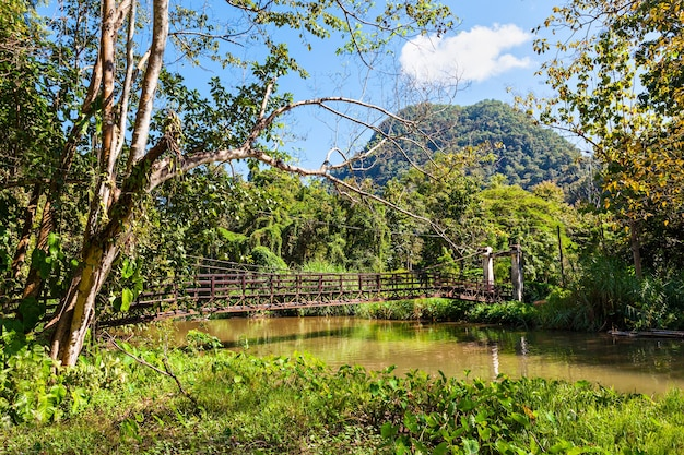 Landscape around tham pla (fish cave) in tham pla pha suea national park, nothern thailand