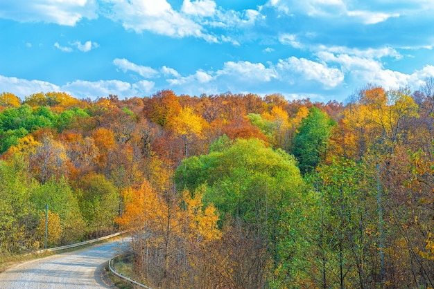 Landscape of the autumn forest in the month of october