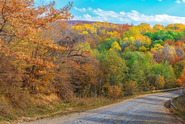 Landscape of an autumn forest with a road passing through it