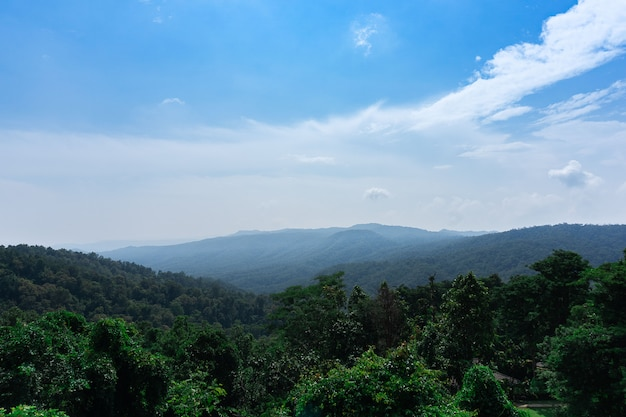 Landscape background sky and rain forest