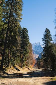 Пейзаж красивых гор с лесом и соснами и голубым небом с солнечными лучами и бликами с дорогой на кавказе в россии село домбай