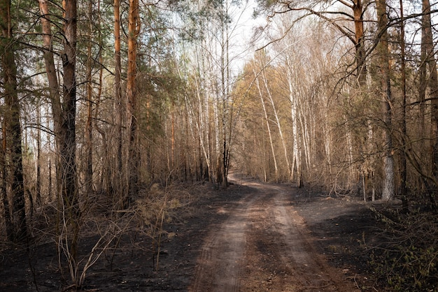 Landscape of the burned forest after the forest fire in countryside