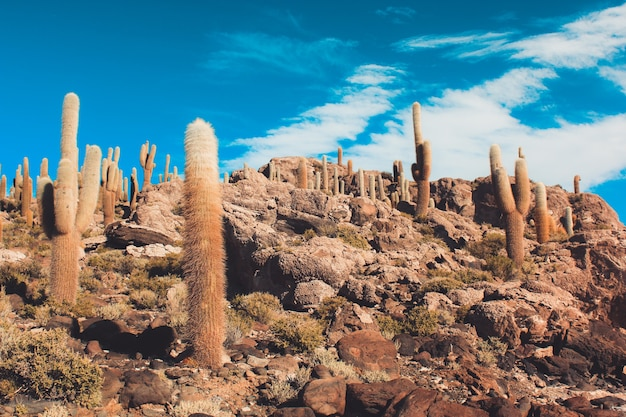Landscape of cactus