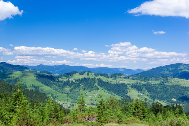 Landscape of a carpathians mountains with fir-trees, grassy valley and sky