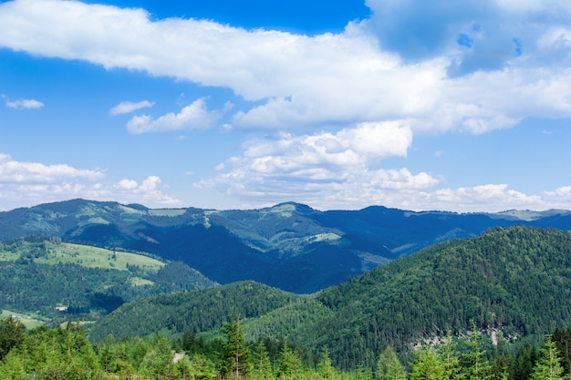 Landscape of a carpathians mountains with firtrees, grassy valley and sky