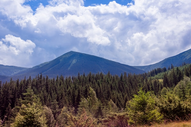 Landscape of a carpathians mountains with firtrees and sky