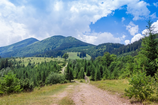 Landscape of a carpathians mountains with footpath, firtrees and sky
