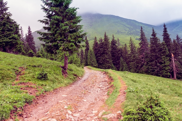 Landscape of a carpathians mountains with footpath