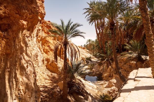 サハラ砂漠の風景チェビカオアシス。湖の上のヤシの木。北アフリカの風光明媚な山のオアシス。ジェベルエルネゲバの麓にあります。晴れた日の午後のアトラス山脈。トズール、チュニジア