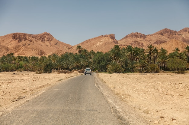 Landscape chebika oasis in sahara desert. car enters palm trees. scenic view mountain oasis in north africa. located at foot jebel el negueba. atlas mountains on sunny afternoon. tozeur, tunisia