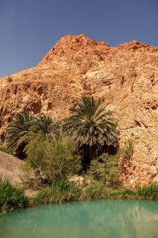 Landscape chebika oasis in sahara desert. palm trees over lake