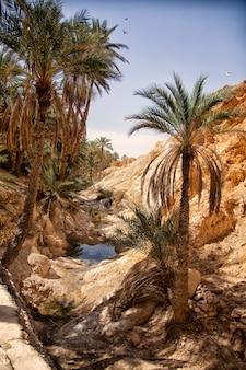 Landscape chebika oasis in sahara desert, palm trees over lake