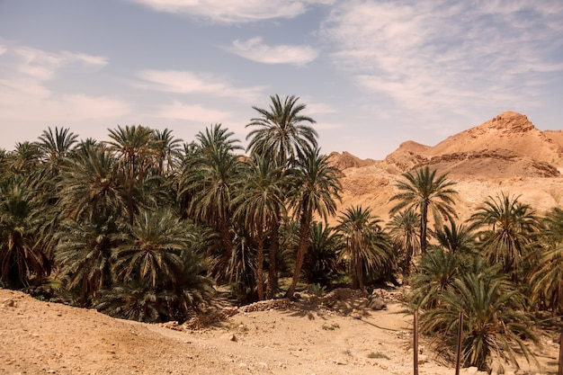 Landscape chebika oasis in sahara desert. ruins settlement and palm