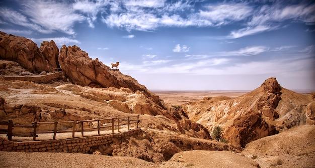 Landscape chebika oasis in sahara desert, sculpture of ram on hill