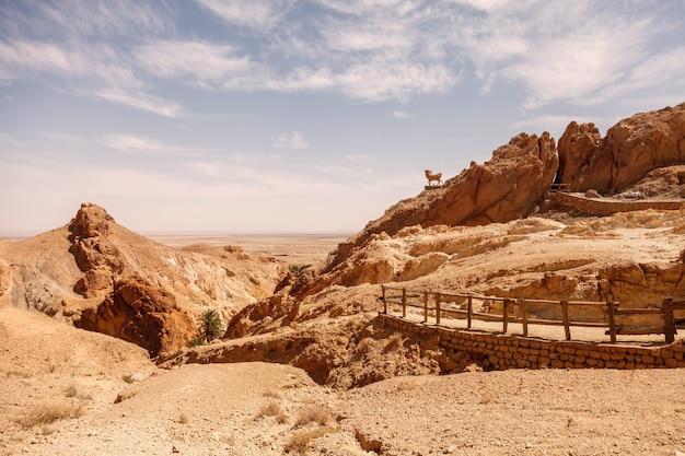 Landscape chebika oasis in sahara desert.