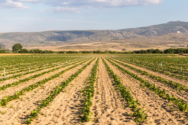 Landscape of cultivated fields