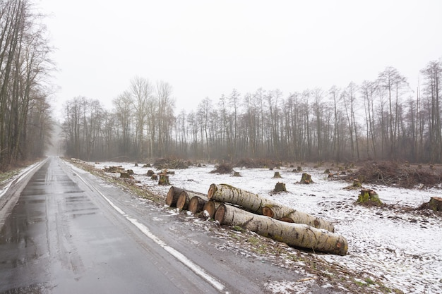 Landscape of cut area in woodland near the road with many big stumps in the background