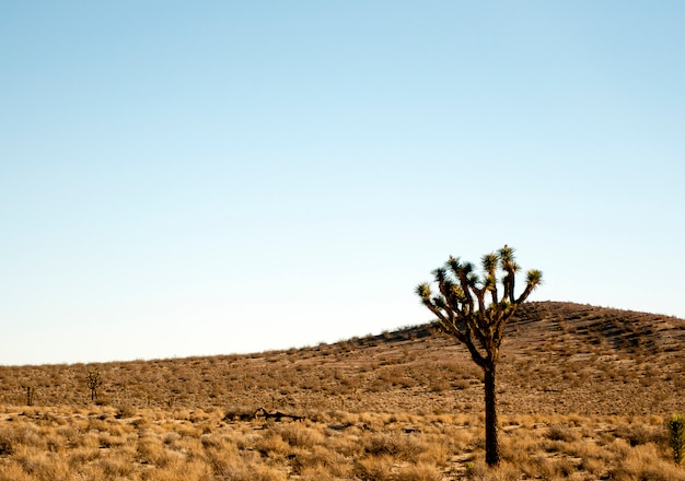 風景、砂漠、カリフォルニア;荒涼とした、旅行、冬 Premium写真
