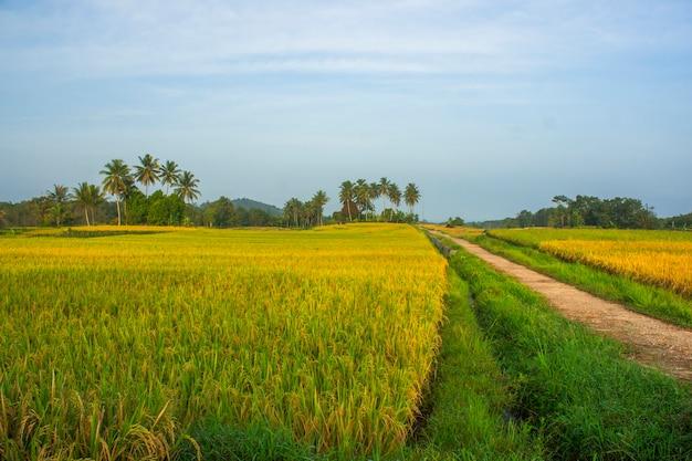 インドネシアの美しいココナッツの木が並ぶ朝日の出の田んぼの風景