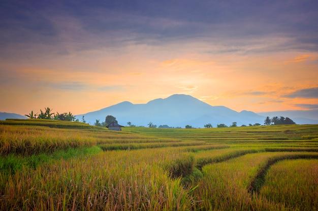 インドネシアの美しい山々と朝日の出の田んぼの風景の広がり