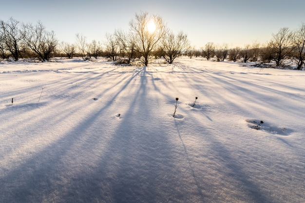 Landscape of a field covered in bare trees and snow under the sunlight