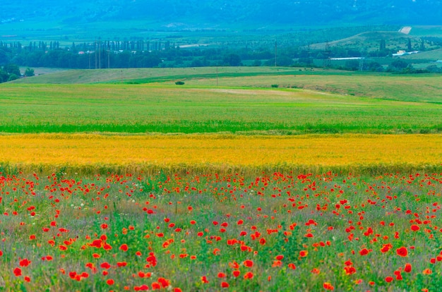 Landscape field of lavender and poppies in the town of bakhchisarai in the crimea.