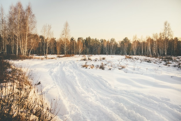 Landscape of forest and field of snow-covered forest road. sunny winter day