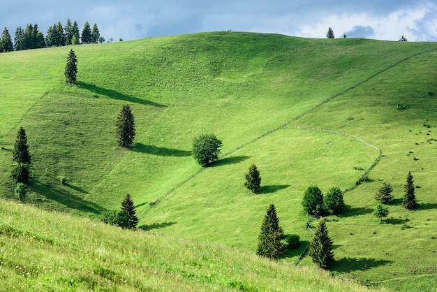 Landscape of fresh green hills in carpathian mountains in spring sunny day.