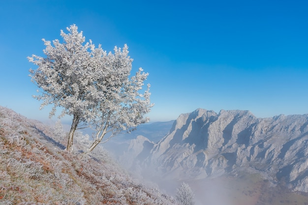 Landscape of frosty trees and basque mountain