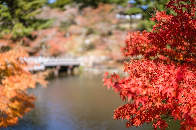 Landscape of garden in the autumn season in a public park of nara, japan