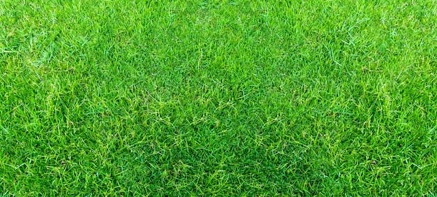 Landscape of grass field in green public park use as natural background or backdrop. green grass texture from a field.