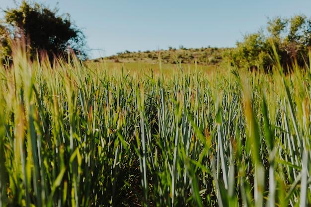 Landscape of a green field