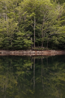 Landscape of a green forest reflected in the calm waters of the lake