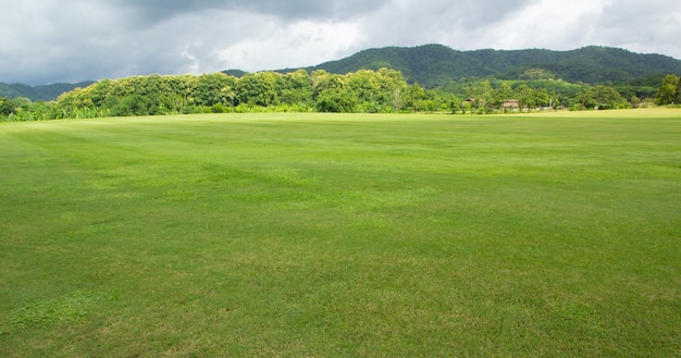 Landscape of green grass field and sky with mountain
